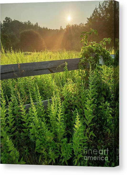 Connecticut Canvas Print featuring the photograph A Midsummer's Morn - Misty Sunrise Over Connecticut Meadow by JG Coleman