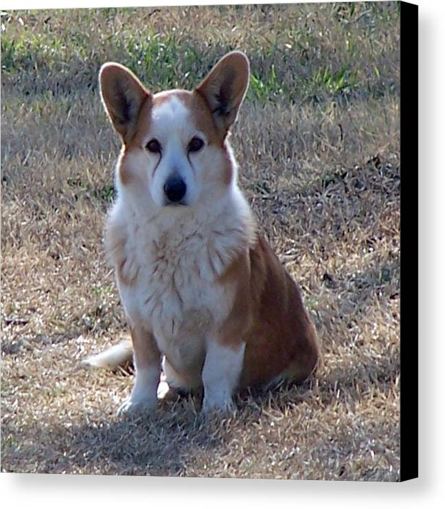 Pets Canvas Print featuring the photograph So Handsome by Lilly King