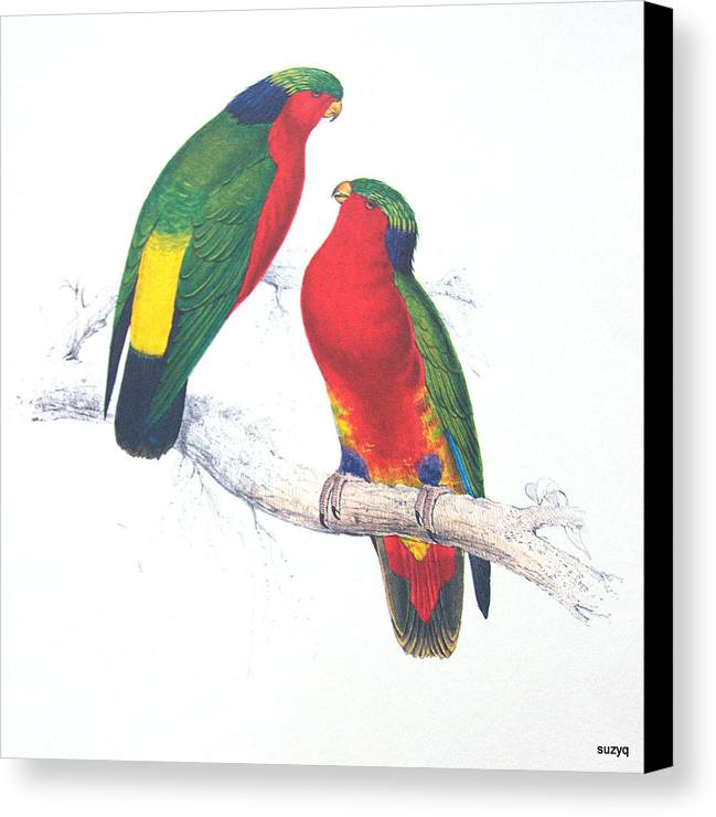 Canvas Print featuring the photograph Ed Lear The Parrots by Sue Rosen