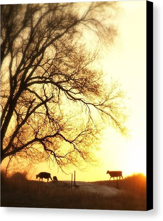 Cows Canvas Print featuring the photograph Sunset Call.. by Al Swasey