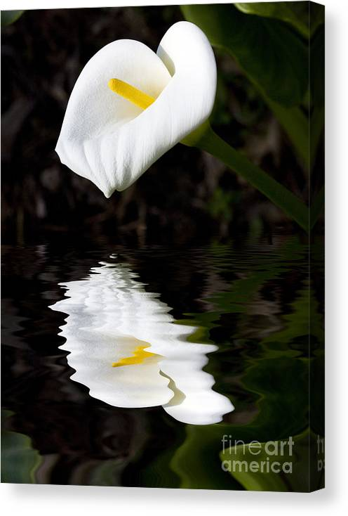 Lily Reflection Flora Flower Canvas Print featuring the photograph Lily reflection by Sheila Smart Fine Art Photography