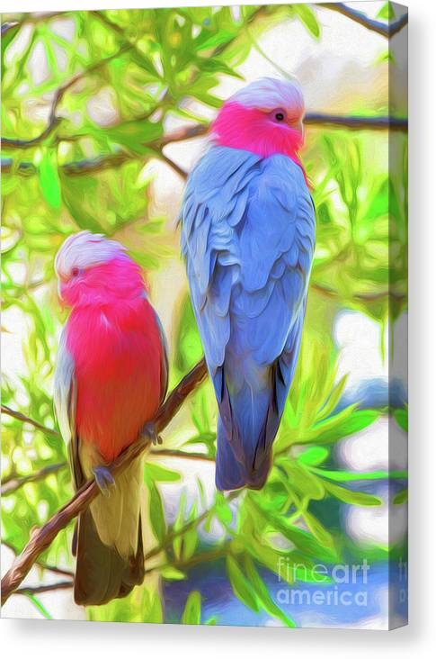 Galahs Canvas Print featuring the photograph Rose cockatoos by Sheila Smart Fine Art Photography