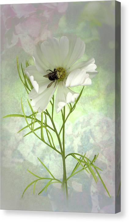 Cosmo Canvas Print featuring the photograph Delicate Nature of Both by Sandi F Hutchins