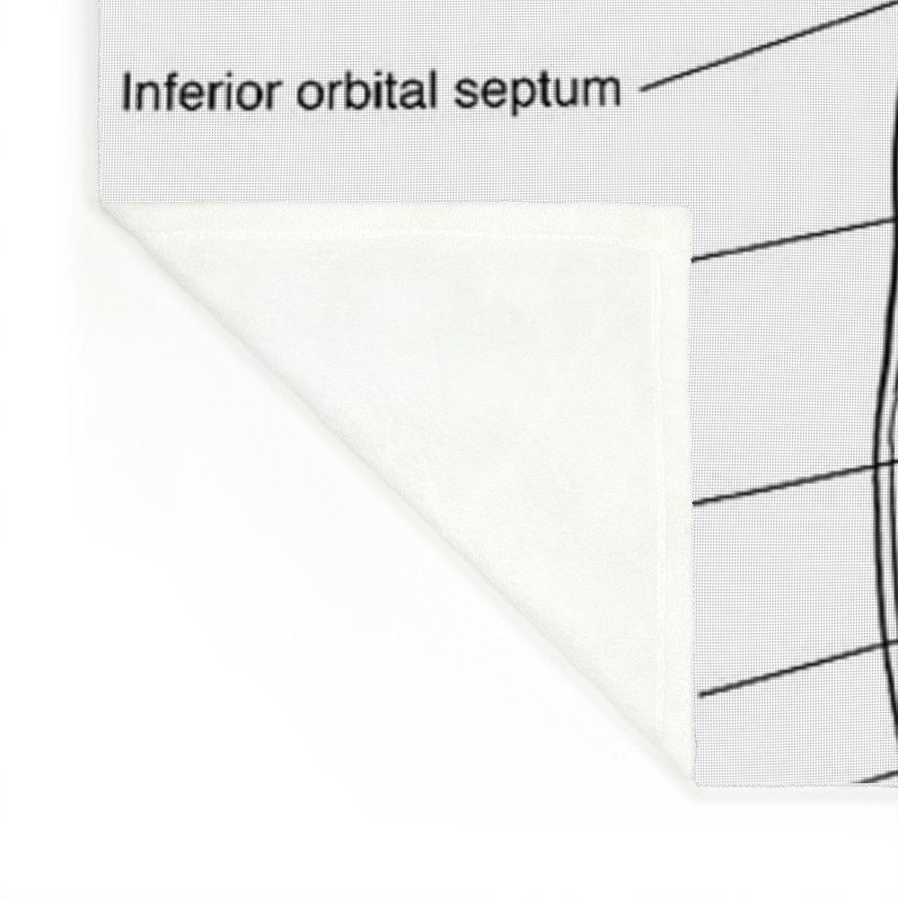 Outstanding Orbital Septum Anatomy Ideas - Anatomy and Physiology ...