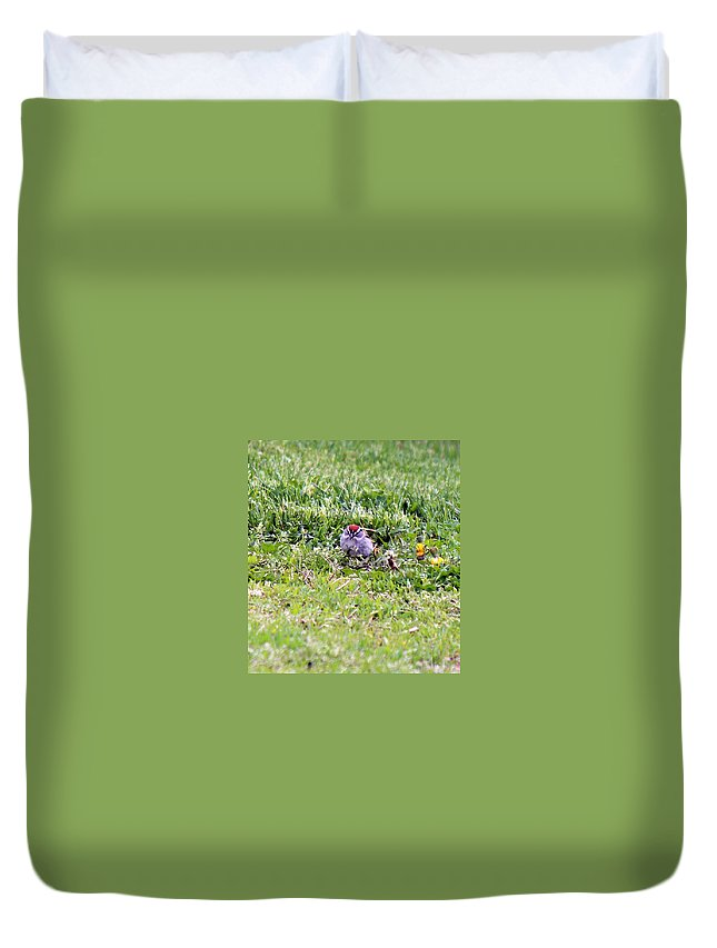 Birds Duvet Cover featuring the photograph       Sparrow by R A W M
