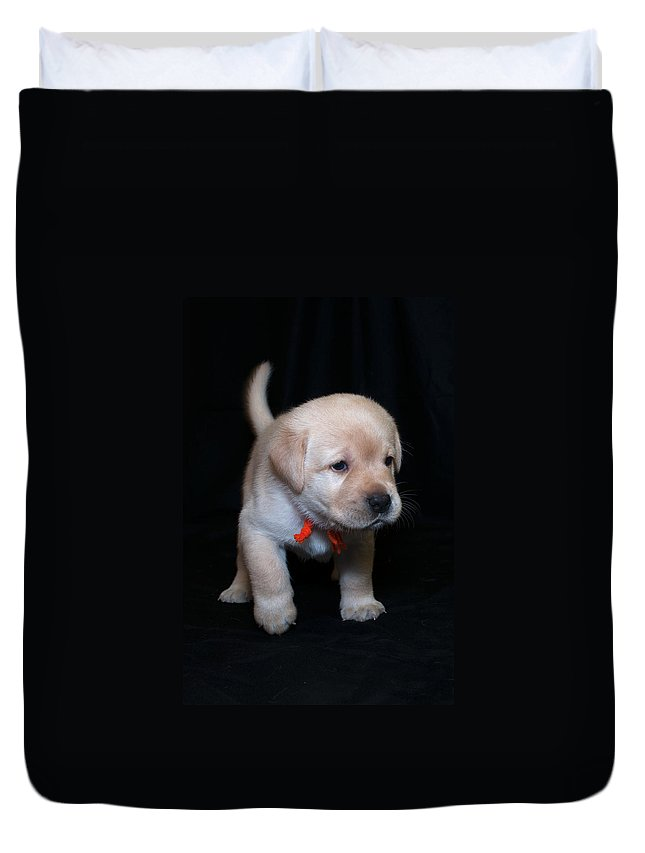 Lab Duvet Cover featuring the photograph 4 Week Old Lab Puppy by Photos By Cassandra