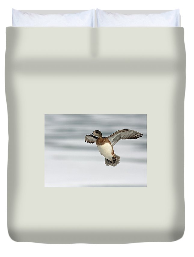 American Duvet Cover featuring the photograph American Wigeon by Jim Nelson