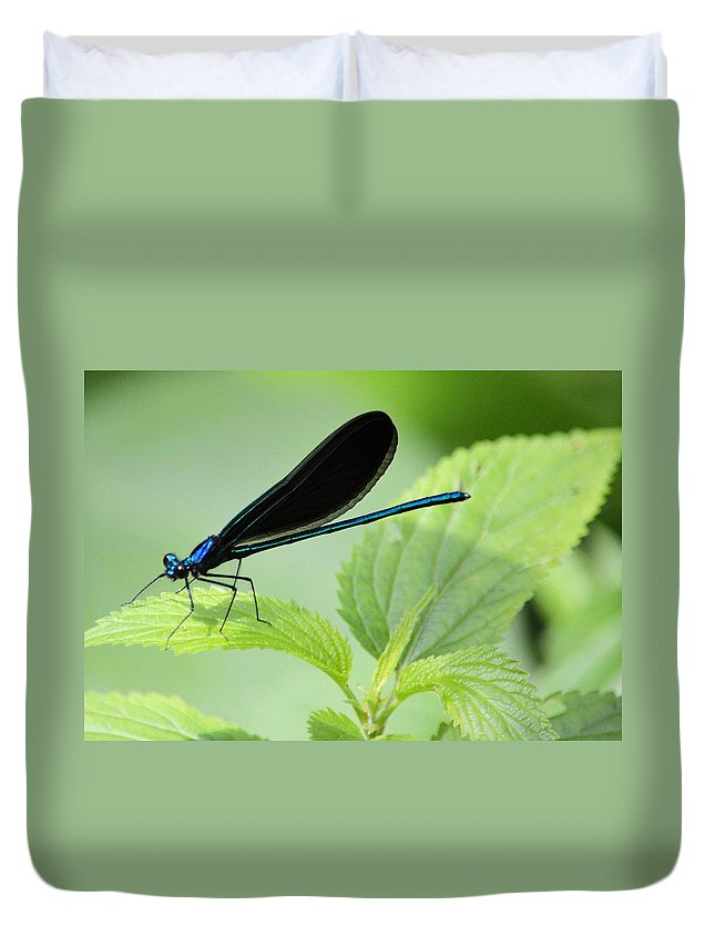 Damselfly Duvet Cover featuring the photograph Black Winged Damselfly 7261 by Bonfire Photography