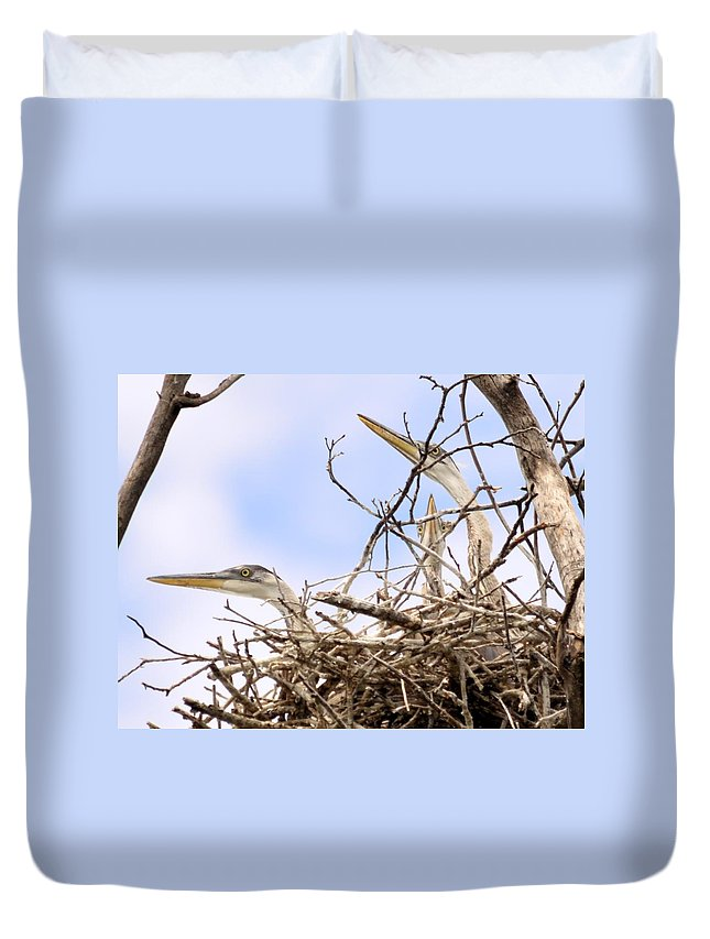 Blue Heron Duvet Cover featuring the photograph Blue Heron Rookery 7214 by Bonfire Photography