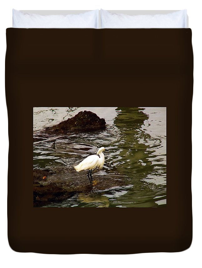 Breeding Plumage Duvet Cover featuring the photograph Breeding Plumage by Robert Brown