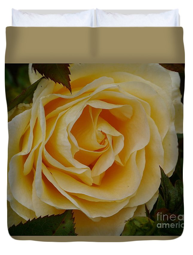Rose Duvet Cover featuring the photograph Golden Celebration by Christiane Schulze Art And Photography
