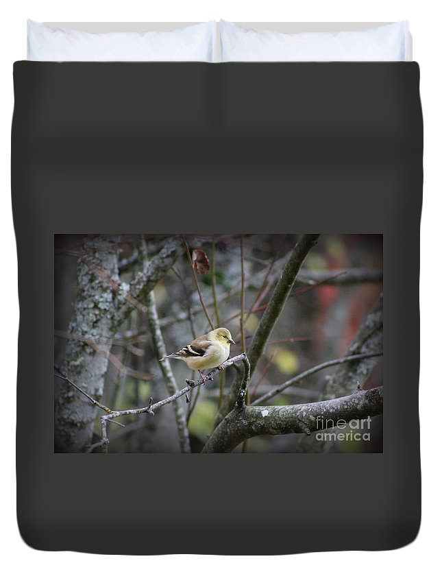 Christmas Duvet Cover featuring the photograph Goldfinch by Leone Lund