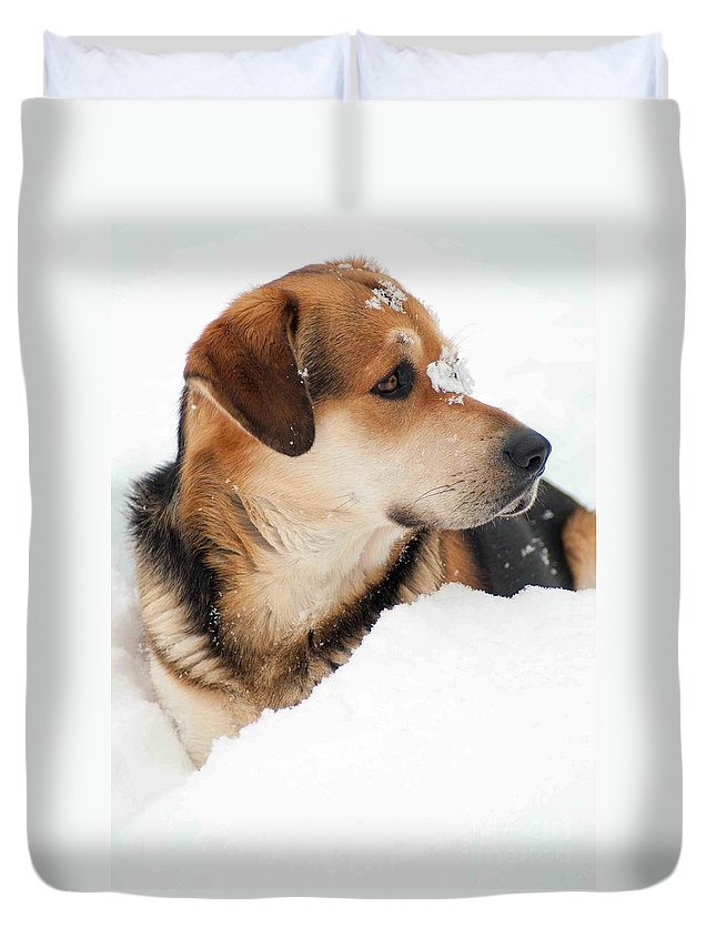 Dog Duvet Cover featuring the photograph Look More Snow by Optical Playground By MP Ray