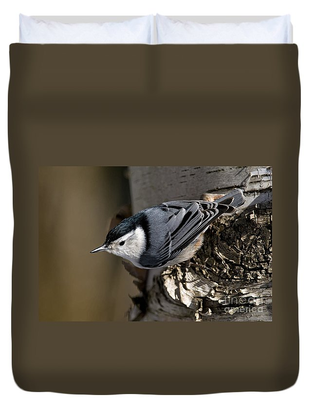 White-breasted Nuthatch Duvet Cover featuring the photograph White-breasted Nuthatch Pictures 35 by World Wildlife Photography