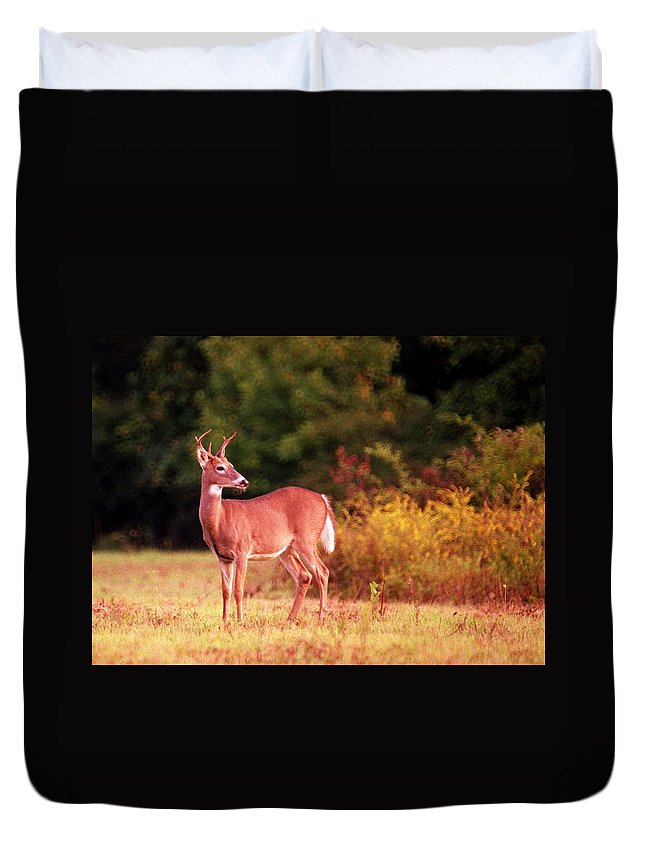 Deer Duvet Cover featuring the photograph 070406-58 by Mike Davis