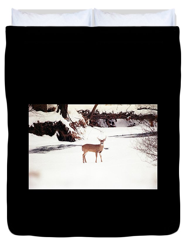 Whitetail Deer Duvet Cover featuring the photograph 080706-89 by Mike Davis