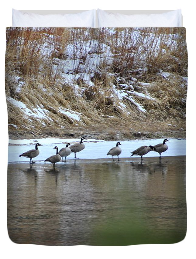 Geese Duvet Cover featuring the photograph A Chilly Swim by Debra Casper