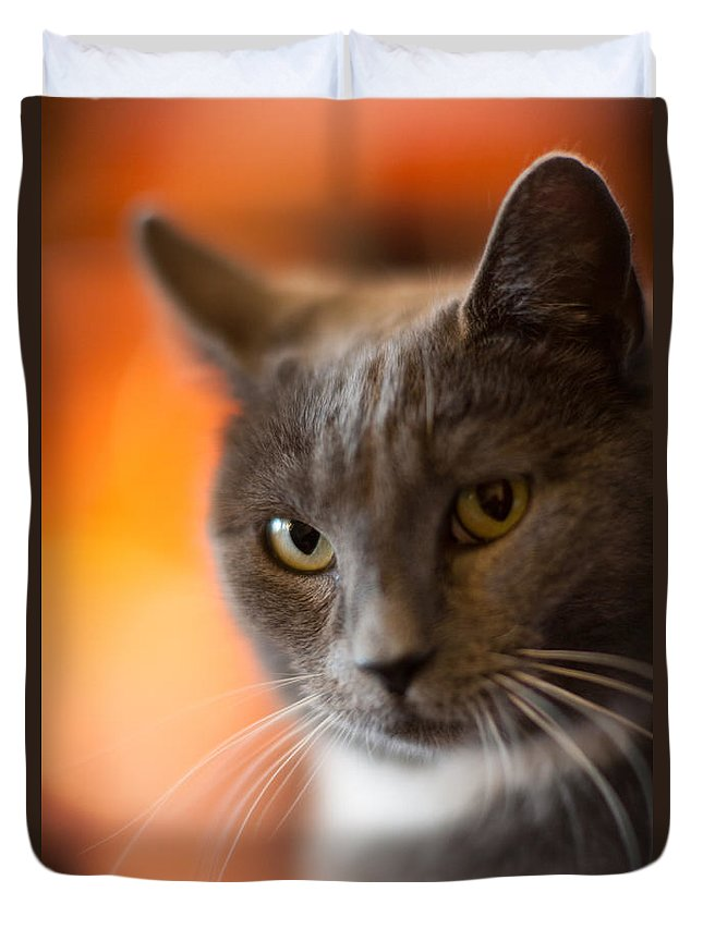 Cat Duvet Cover featuring the photograph A Peek by Mike Reid