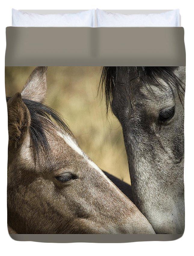 Wild Horses Duvet Cover featuring the photograph A Tender Moment by Saija Lehtonen