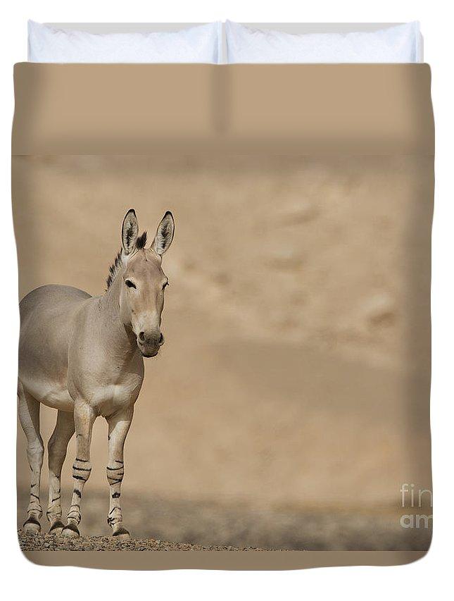 African Wild Ass Duvet Cover featuring the photograph African Wild Ass Equus Africanus by Eyal Bartov