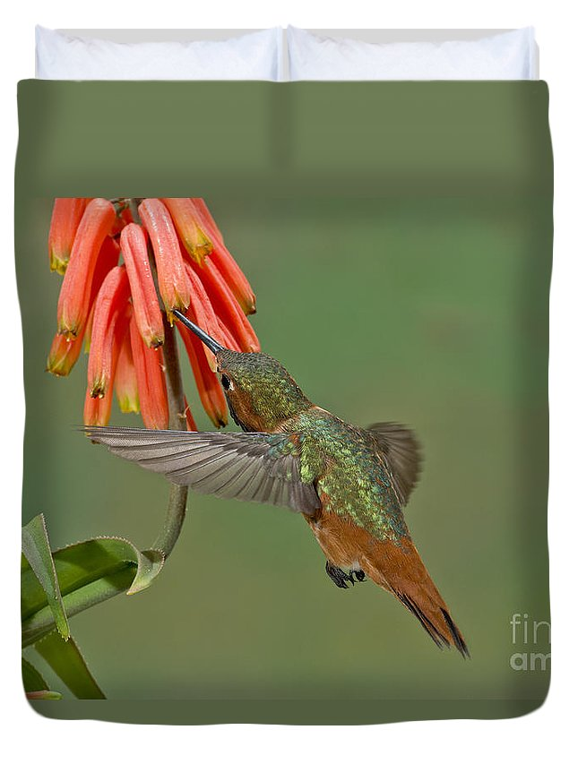 Allen's Hummingbird Duvet Cover featuring the photograph Allens Hummingbird Feeding by Anthony Mercieca