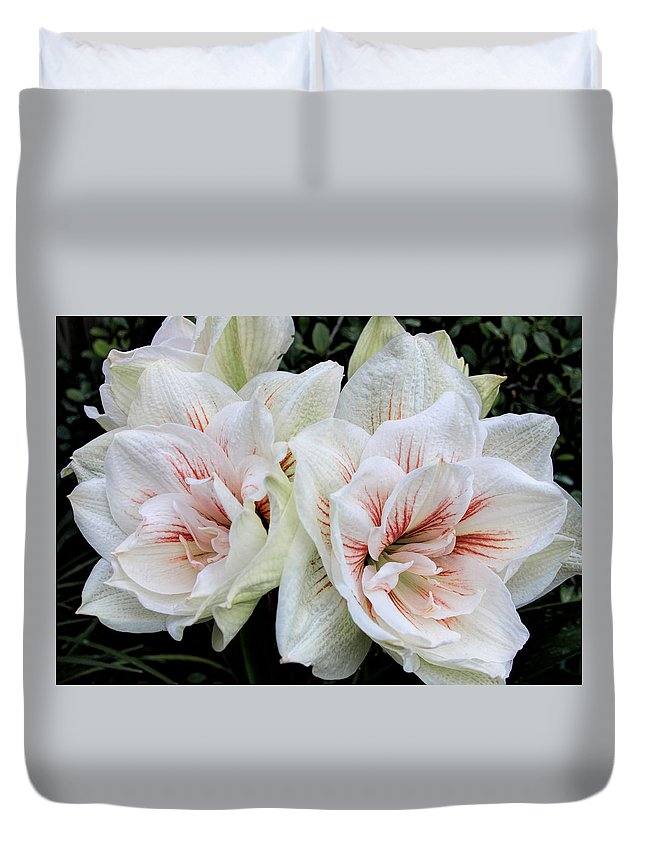 Flower Duvet Cover featuring the photograph Amaryllis Cluster by Dave Bosse
