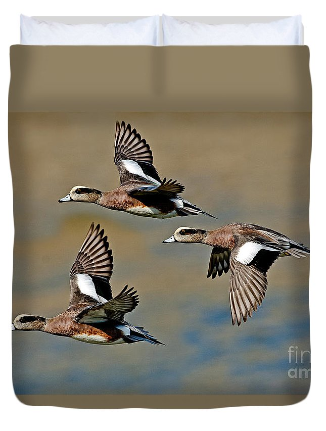 Fauna Duvet Cover featuring the photograph American Wigeon Drakes by Anthony Mercieca