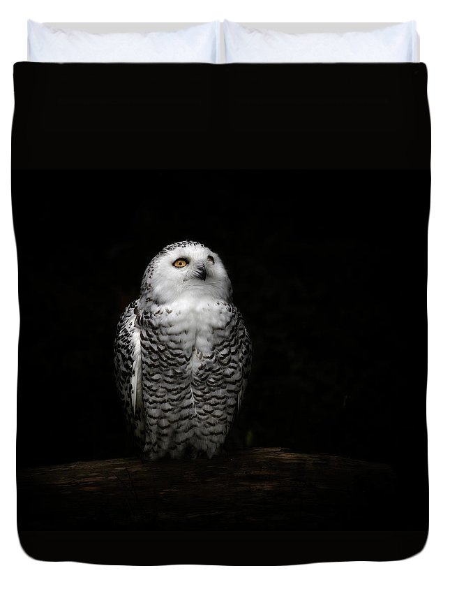 Animal Themes Duvet Cover featuring the photograph An Owl by Kaneko Ryo