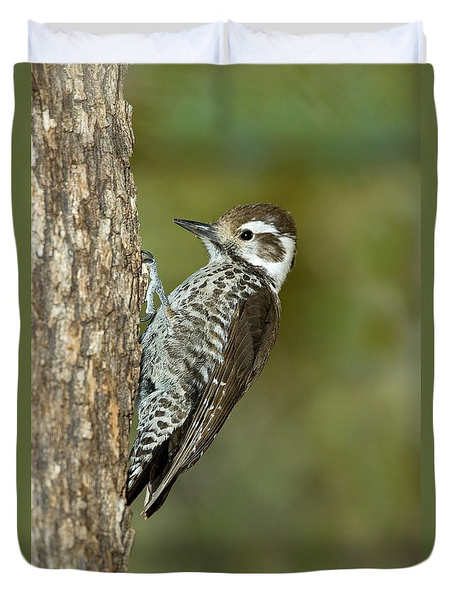 Animal Duvet Cover featuring the photograph Arizona Woodpecker by Anthony Mercieca