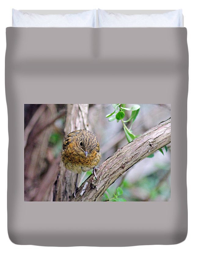 Baby Robin Duvet Cover featuring the photograph Baby Robin by Tony Murtagh