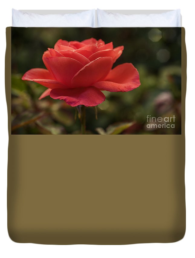 Rose Duvet Cover featuring the photograph Beautiful Rose by Vishwanath Bhat