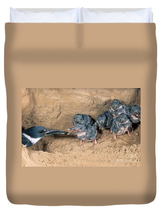Belted Kingfisher Duvet Cover featuring the photograph Belted Kingfisher by Anthony Mercieca