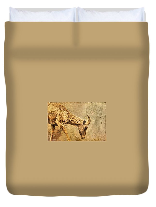 Bighorn Sheep Duvet Cover featuring the photograph Bighorn Sheep by Dan Sproul