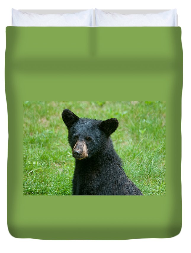 Black Bears Duvet Cover featuring the photograph Black Bear Cub by Brenda Jacobs