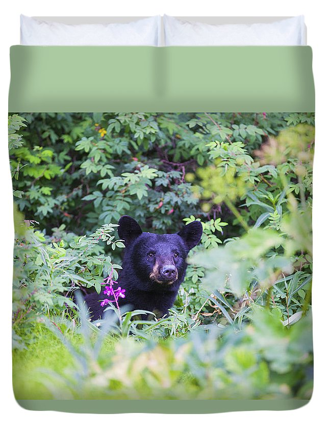Alaska Duvet Cover featuring the photograph Black Bear by Kyle Lavey