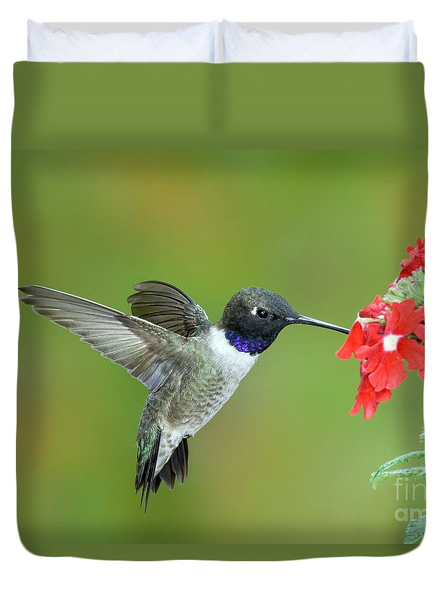 Fauna Duvet Cover featuring the photograph Black Chinned Hummingbird by Anthony Mercieca