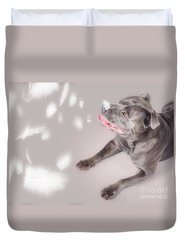 Animal Duvet Cover featuring the photograph Blue Staffie Dog Watching Floating Feathers by Jorgo Photography - Wall Art Gallery