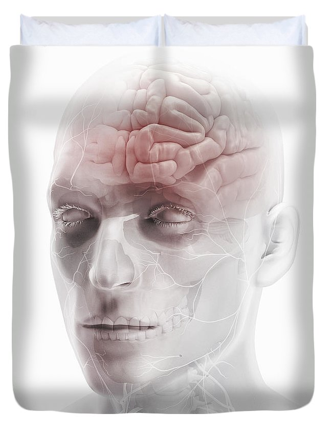 Cranium Duvet Cover featuring the photograph Brain And Nerves Of The Head by Science Picture Co