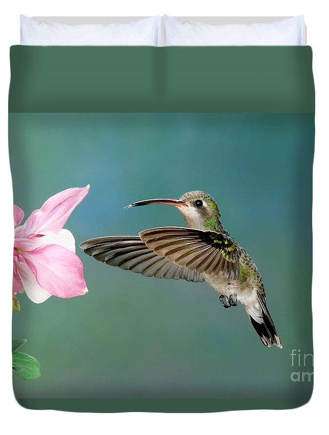 Fauna Duvet Cover featuring the photograph Broad-billed Hummingbird At Flower by Anthony Mercieca