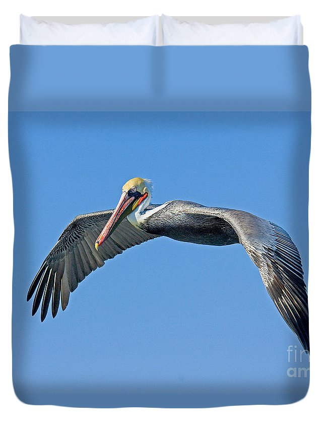 Brown Pelican Duvet Cover featuring the photograph Brown Pelican In Flight by Anthony Mercieca