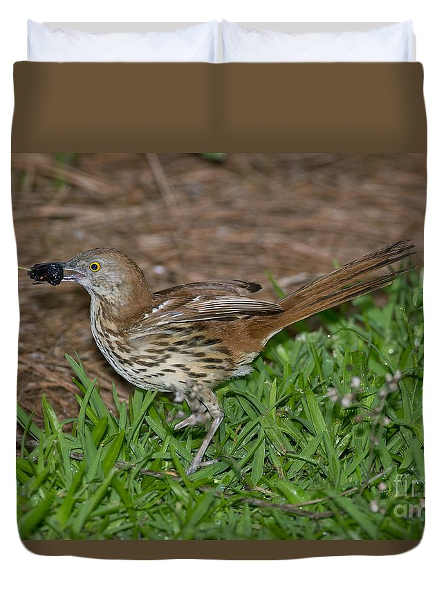 Brown Thrasher Duvet Cover featuring the photograph Brown Thrasher by Anthony Mercieca