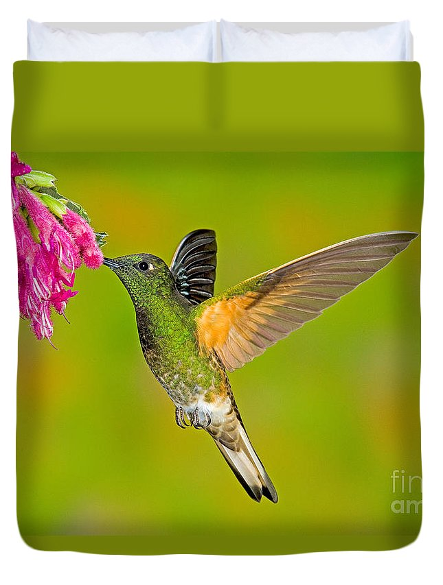 Fauna Duvet Cover featuring the photograph Buff-tailed Coronet Hummingbird by Anthony Mercieca