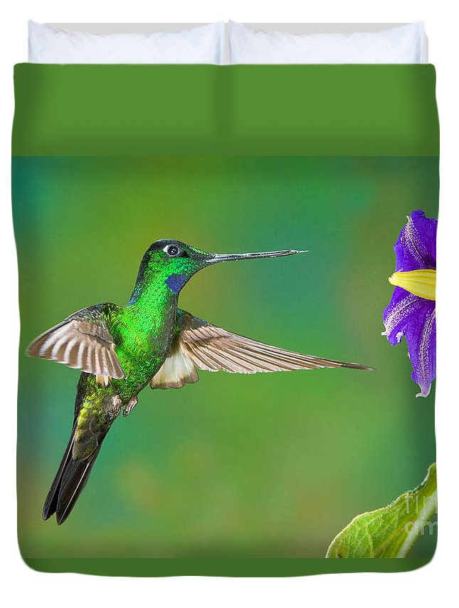 Animal Duvet Cover featuring the photograph Buff-winged Starfrontlet by Anthony Mercieca
