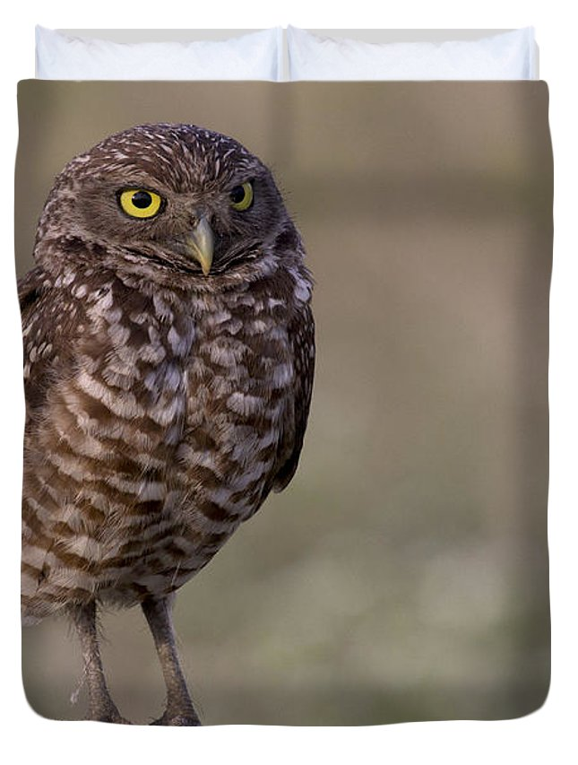Burrowing Owl Duvet Cover featuring the photograph Burrowing Owl Photo by Meg Rousher