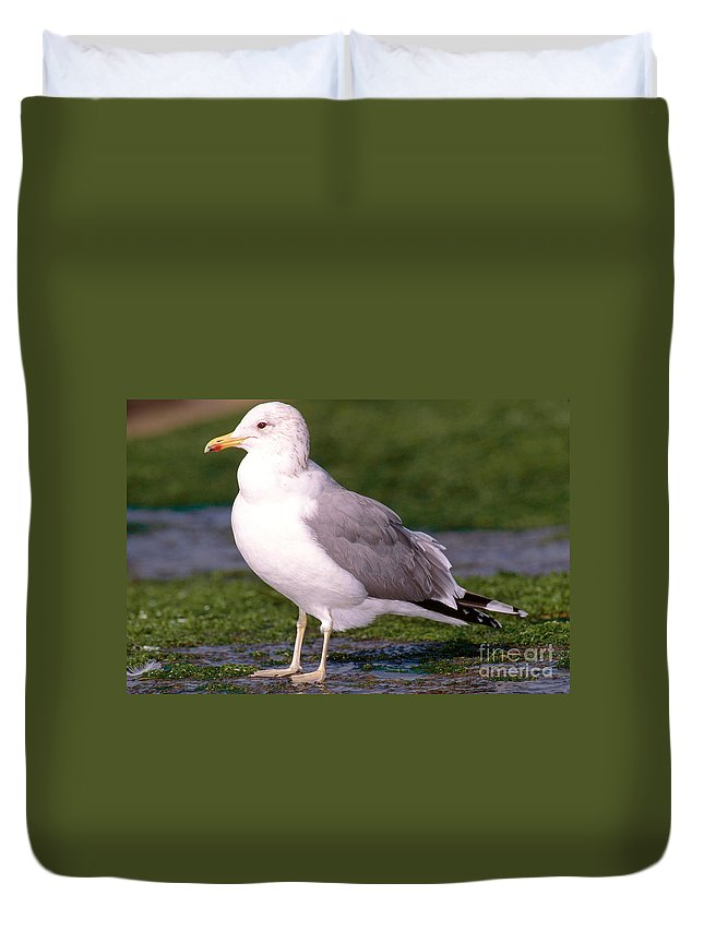 California Gull Duvet Cover featuring the photograph California Gull by Anthony Mercieca