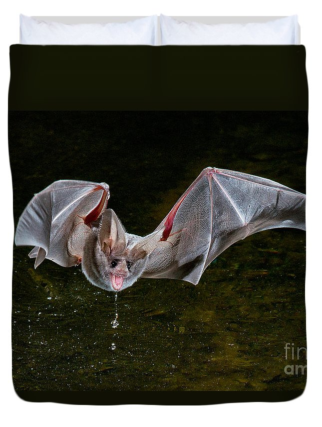 Animal Duvet Cover featuring the photograph California Leaf-nosed Bat by Anthony Mercieca