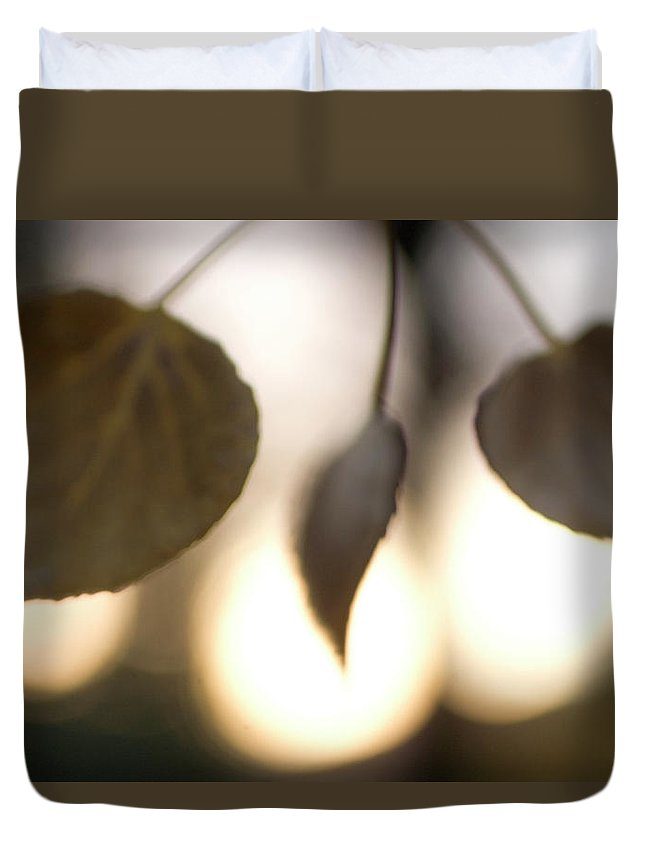 Nature Duvet Cover featuring the photograph Close-up Of Aspen Leaves In Autumn by Phil Schermeister