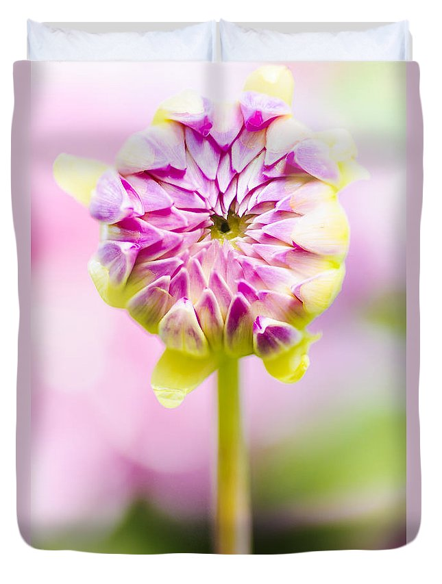 Dahlia Duvet Cover featuring the photograph Closed Pink Baby Dahlia Flower. Spring Blossom by Jorgo Photography - Wall Art Gallery