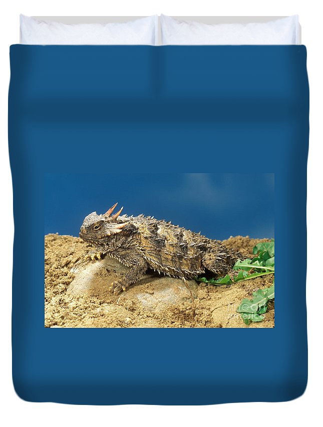 Lizard Duvet Cover featuring the photograph Coast Horned Lizard by Anthony Mercieca