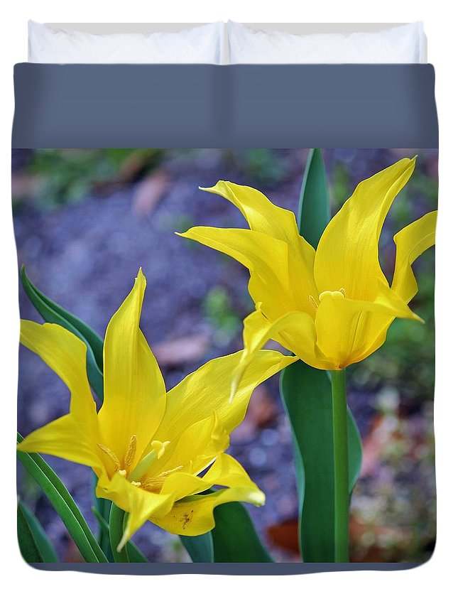 Spring Duvet Cover featuring the photograph Colors Of Spring by Cynthia Guinn